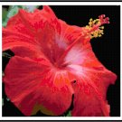 Fiery Hibiscus Pattern Chart Graph