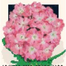 Antique Verbena Flower Seed Packet Pattern Chart Graph