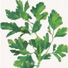 Antique Parsley Seed Packet Pattern Chart Graph