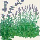 Antique Lavender Seed Packet Pattern Chart Graph