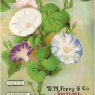 Garden Seed Annual 1913 Magazine Cover Pattern Chart Graph