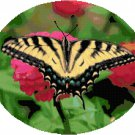 Tiger Swallowtail Butterfly Cross Stitch Pattern Chart Graph