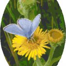 Spring Azure Butterfly Cross Stitch Pattern Chart Graph