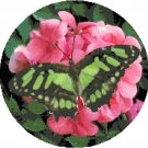 Malachite Butterfly Cross Stitch Pattern Chart Graph