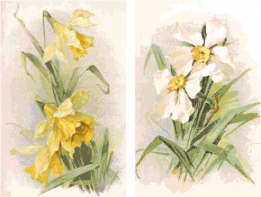 Daffodils and Jonquils Set of 2 Cross Stitch Patterns Charts Graphs