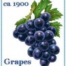 Country Grapes Cross Stitch Pattern Chart Graph