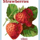 Strawberries Cross Stitch Pattern Chart Graph