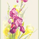 Magenta Iris Cross Stitch Pattern Chart Graph