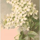 White Lilacs Cross Stitch Pattern Chart Graph by Catherine Klein