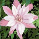 Pink and White Clematis Cross Stitch Pattern Chart Graph