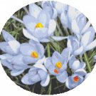 Spring Crocus Cross Stitch Pattern Chart Graph