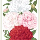 Gorgeous Peonies 2 Cross Stitch Pattern Chart Graph