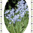 Sweet Bluebells Cross Stitch Pattern Chart Graph