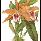 Cattleya Tenebrosa Orchid Cross Stitch Pattern Chart Graph