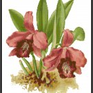 Cattleya Laelia Dayana Orchid Cross Stitch Pattern Chart Graph