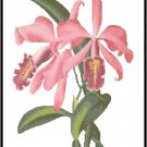Cattleya Maxima Malouana Orchid Cross Stitch Pattern Chart Graph