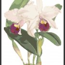 Cattleya Trian Orchid Cross Stitch Pattern Chart Graph