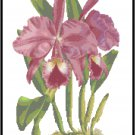 Cattleya Labiata Autumnalis Orchid Cross Stitch Pattern Chart Graph
