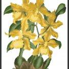 Odontoglossum Insleayi Inschootianum Orchid Cross Stitch Pattern Chart Graph