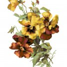 Gold and Bronze Pansies Cross Stitch Pattern Chart Graph