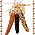 Indian Corn Cross Stitch Pattern Chart Graph