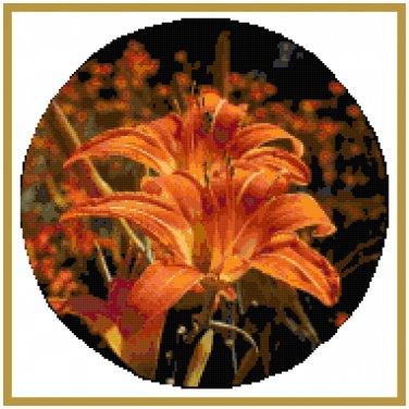 Orange Blaze Daylily Pattern Chart Graph
