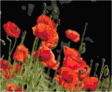 Red Beauties (Poppies) Pattern Chart Graph