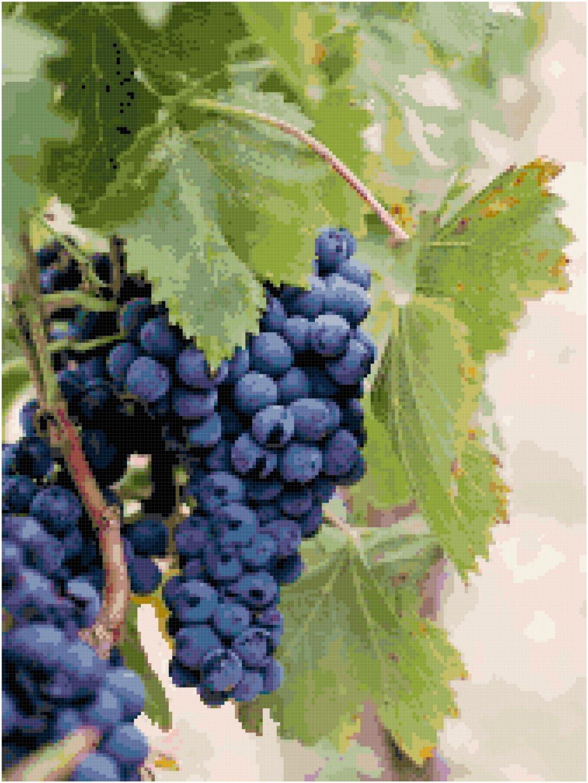 Abundant Fruit of the Vine Pattern Chart Graph