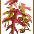 Autumn Oak Leaves Patter Chart Graph