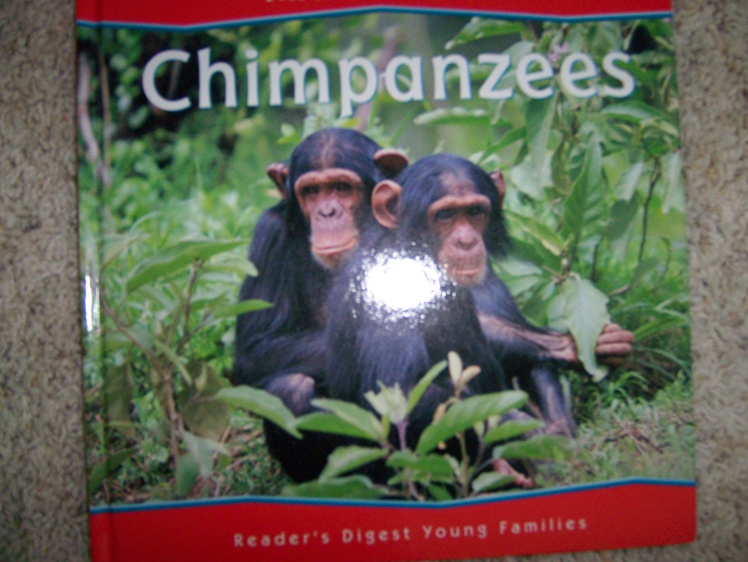 "All About Animals ""Chimpanzees"" Illustrated Hardcover Books BNK744"
