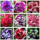 free ship Garden Petunia petals flower seeds for garden petunia semillas de petunias, 100 seeds
