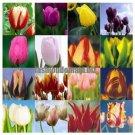 free ship Tulip bonsai, not tulip bulbs, hydroponic bonsai flower tulip seeds   3 seeds