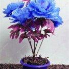 Rare Blue Peony Petal Seeds Multifarious Flower Bonsai Outdoor Decoration Garden Viewing Planting S