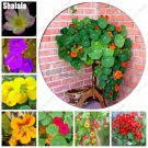 10 Pcs Rare Dry Gold Lotus Edible Bonsai Nasturtium Flower Seeds Bonsai Plants Ornamental Plant For