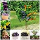 Black Brin Plum Seeds High Nutritious Fruit And Vegetable Non Gmo Bonsai Seed For Garden Orchard Pe