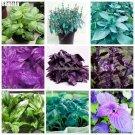 150 Mixed Flower Seeds Semilla Albahaca Basilicum Basil Seeds Bonsai Ocimum Basilicum Vegetable See