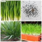 Chinese Chive Seeds Green Healthy Vegetable Rare Indoor  Outdoor Bonsai Non Gmo Leek Seeds Garden F
