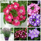 Verbena Seeds Herb Flower Seeds Outdoor Patio Bonsia Grass Plants Nature Plants Diy Home Garden Hou