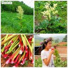 Gunnera Manicata Seeds Bonsai Plant Herb Rhubarb For Da Huang Flower Seeds Under The Sun Plants Can