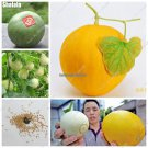 Delicious Muskmelon Seeds Japan Fruit Mini Cantaloupe Melon Seeds Balcony  Yard Organic Bonsai Plan