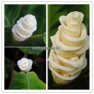 100PCS Calathea warscewiczii seeds Ice Cream Flowers seeds White Lovely Flower Gift for lover Garde