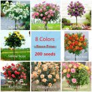 200pcs 8 colors Chinese Rose tree seeds,Variety Ideal DIY Yard bonsai flower Perfect Gift for your