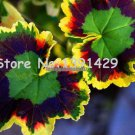 boss crazy 100 pcs Rare Geranium seeds, Variegated Geranium potted winter garden flower,bonsai pott