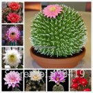 On Sale 500 Rare African Cactus Seeds Mixed Succulent tree Plant Purify Air Bonsai Resistant Heat E