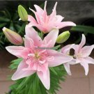 3.25 Promotion 50pcs perfume Lily Seeds SECRET GIFTS, flower Germination 99 creepers bonsai DIY gar