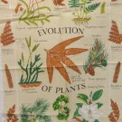 Evolution of Plants tea towel Royal Botanic Kew Gardens cotton unused hc3372