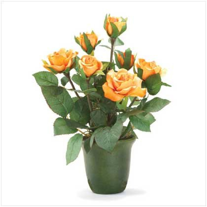 Orange-Yellow Roses