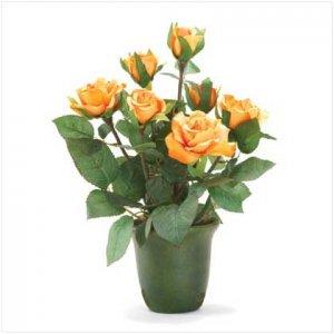 Orange-Yellow Roses