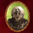 Havanese Jewelry Brooch Handcrafted Ceramic - Pirate