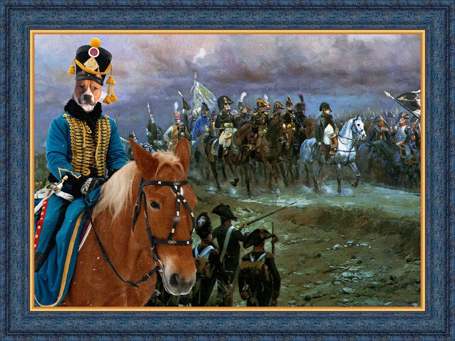 American Staffordshire Terrier Fine Art Canvas Print - The Campaign Napoleon